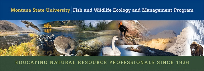 montana state university fish and wildlife ecology and management program. Educating natural resource professionals since 1936
