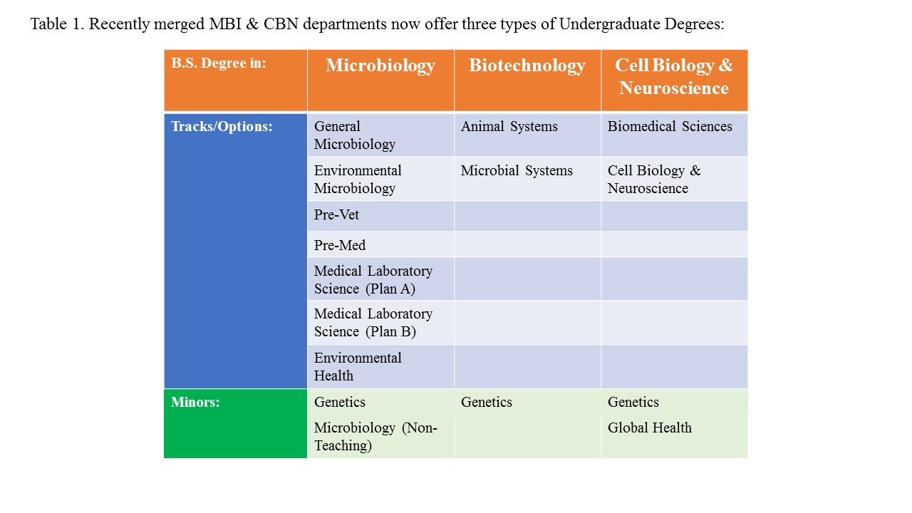 Table depicting the three undergraduate degree programs including major and minor options.