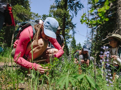 Msse Plant Science Flowers of the Rockies