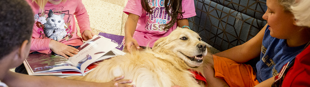 A therapy dog happily reclines into the laps of students.