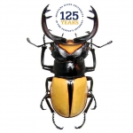 Yellow Beetle with MSU 125th logo