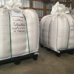 Yellowstone and Decade winter wheat from the MSU Montana Foundation Seed Foundation is ready to ship to Bulgaria. Photo courtesy of Doug Holen.