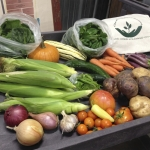A bountiful CSA share from Towne's Harvest Garden.