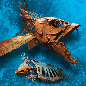 Monster fish found in the Savage Ancient Seas exhibit at MOR.