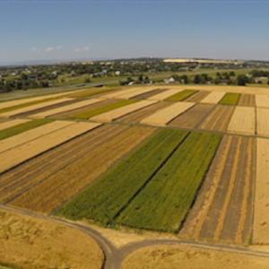 Patchwork Field