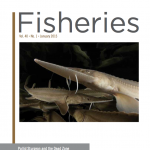 The January, 2015, edition of the journal Fisheries features pallid sturgeon on its cover and contains an paper detailing MSU-led research that uncovers the cause of the endangered species' decline in the upper Missouri River.