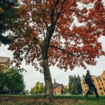 An Ohio buckeye tree glows red in its fall foliage on the northeast corner of the Strand Union Building at Montana State University. MSU Photo by Adrian Sanchez-Gonzalez