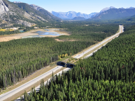 Banff wildlife crossing overpass |