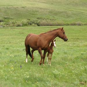 Brown horse in green field