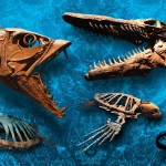 A photo of fish fossils