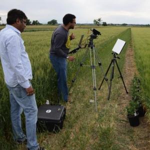 Prashnat Jha tests for herbicide-resistant kochia