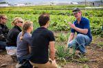 Towne's Harvest garden | MSU photo by Kelly Gorham