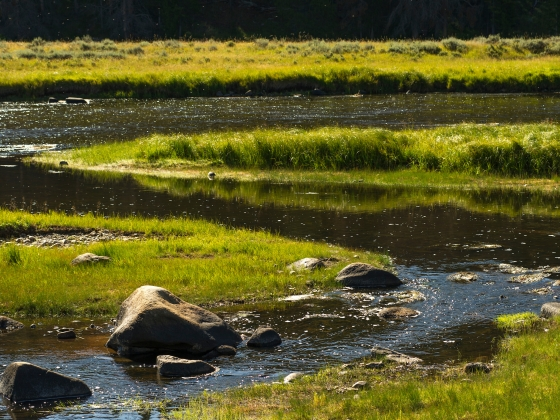 An image of a river winding through tall green grass in a meadow | Kelly Gorham/MSU