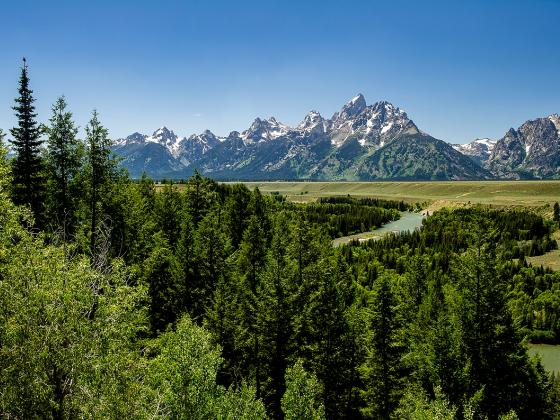 Image of the Teton Mountain range with trees in the foreground.   MSU photo by Kelly Gorham