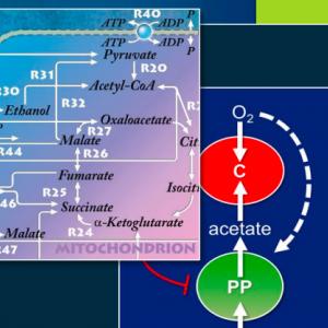 Metabolic Pathway Analysis 2017 Conference