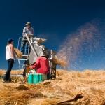 Harvesting at Arthur H. Post Farm