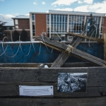 Detail of the pop-up museum shows a photograph and a quote with fence wiring simulating barbed-wire on Monday, Dec. 12, 2016, where history students at Montana State University use a dumpster to help illustrate World War I trench warfare for their class. The pop-up museum, located on MSU's Centennial Mall, across from the Renne Library, contains photographs, artifacts, and simulated trenches with informational posters of Montana's role in the World Wars. MSU Photo by Adrian Sanchez-Gonzalez