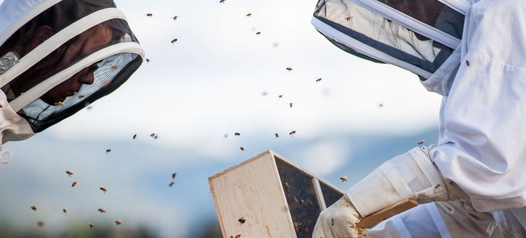 honeybees arriving at MSU