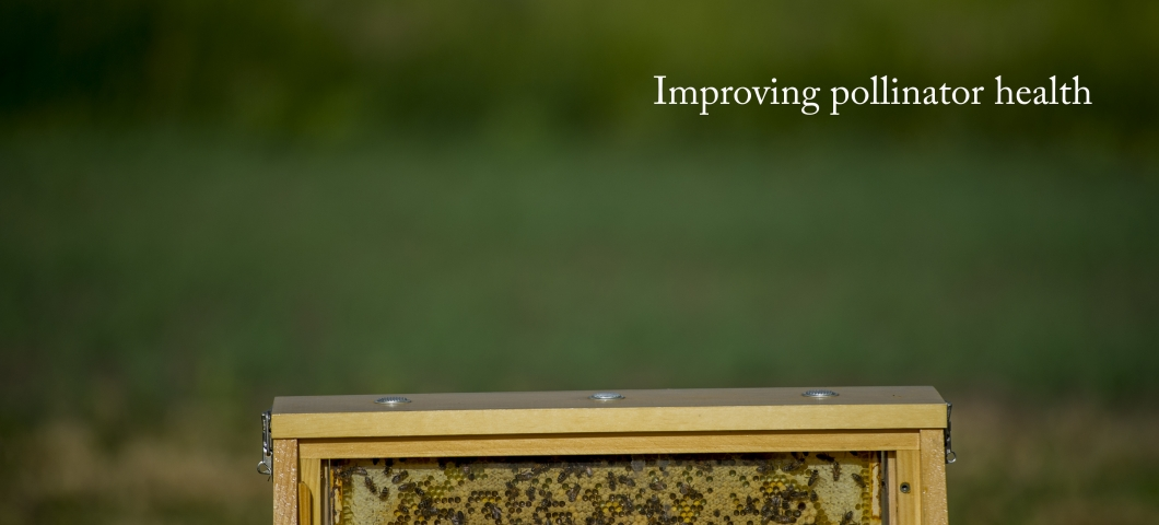 Improving pollinator health