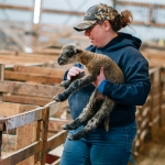 Katie Combs, a senior in animal range science in the College of Agriculture at Montana State University, carries a lamb into a pen on Wednesday, April 26, 2017, at MSU Red Bluff Research Ranch near Norris, Mont. Lambing season, typically the entire month of April, helps students in animal range science receive first-hand experience in a working ranch. MSU Photo by Adrian Sanchez-Gonzalez