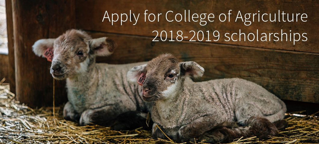 Apply for College of Agriculture 2018-2019 Scholarships