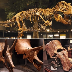 Photo collage of a T.rex, Triceratops skull, and a mammoth skull.