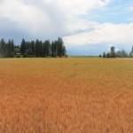 Egan field.