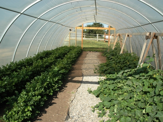 High tunnel at the MSU Horticulture Farm.