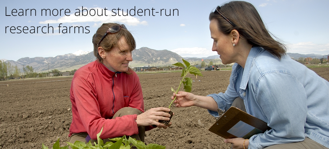 Learn more about our student-run research farm