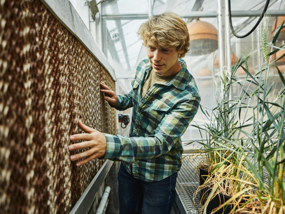 A man in a green flannel examines an evaporation system inside a greenhouse. | MSU Photo by Adrian Sanchez-Gonzalez