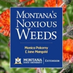 "Cover photo of ""Montana's Noxious Weeds publication, showing an example of noxious weeds"