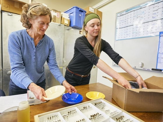 Two women pack boxes with bee-collecting supplies to send to rural schools across Montana. | Adrian Sanchez-Gonzales