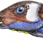 An artist's illustration portrays an Oryctodromeus head. (Illustration by Lee Hall).