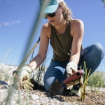 Montana State University graduate civil engineering student Emma Raeside plants hardstem bulrush grass for a wetland treatment system at the Ennis National Fish Hatchery on Monday, June 19, 2017, near Ennis, Montana.  MSU Photo by Adrian Sanchez-Gonzalez