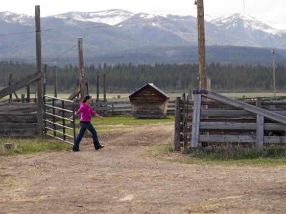A women closes a gate on a ranch with mountains in the background. | MSU photo by Kelly Gorham