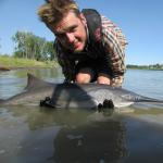 Niall Clancy, a 2017 graduate of MSU's Department of Ecology, has published research in the journal Fisheries that suggests that amphibians may help conserve native fish populations. Shown is Clancy holding a paddlefish. Contributed photo