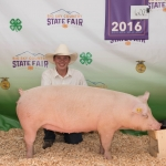 Local 4-H participant Derek Ireland is pictured with his pig Montana State University purchased at the recent Gallatin County Fair. Submitted photo.