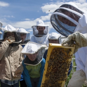 Pollinator Video - YouTube