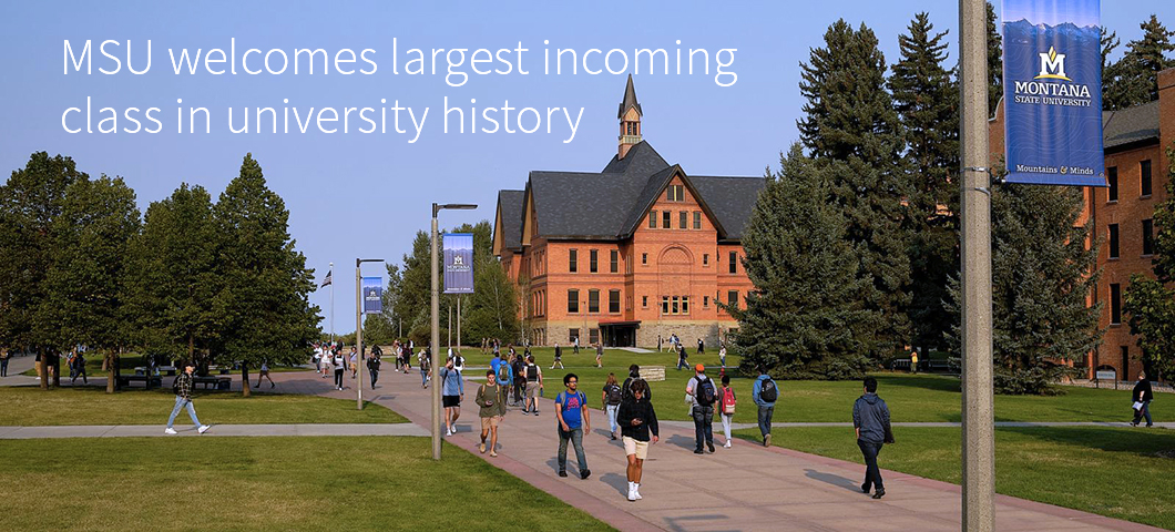 Students walk along sidewalks through a college campus with a bell towered academic building in the background. | MSU