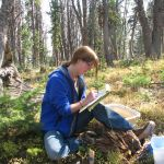 Former MSU grad student Erin Lonergan monitors whitebark pine seedlings in the field. (Photo by Cathy Cripps).