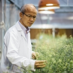 Chaofu Lu, associate professor in the Department of Plant Sciences and Plant Pathology, has received a $1.2 million grant from the U.S. Department of Energy to research ways to improve the usefulness of camelina, an ancient crop with biofuel potential. MSU Photo by Adrian Sanchez-Gonzalez