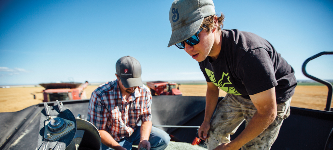 MSU helps Montana lead the nation in production  of pulse crops—peas, lentils and garbanzo beans