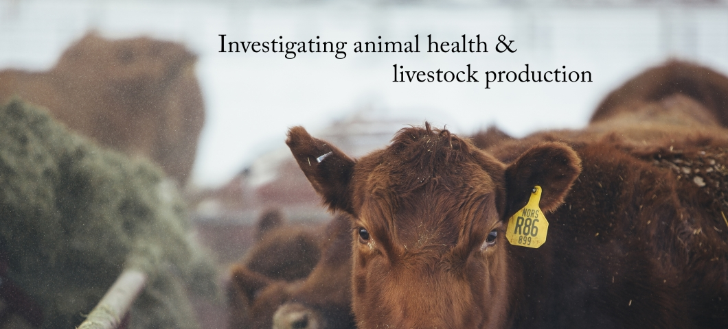 Animal health & livestock production