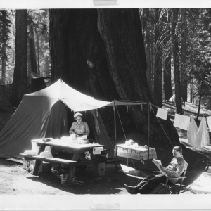 Campers with their campsite at the base of a Giant Sequoia tree in the national park.