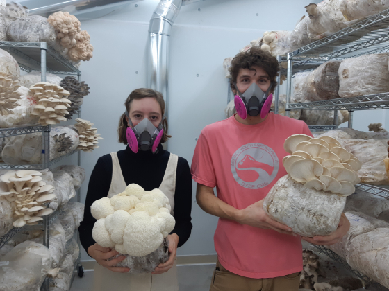 A man and a woman wear masks and hold large mushrooms in a room with shelves full of large mushrooms.  