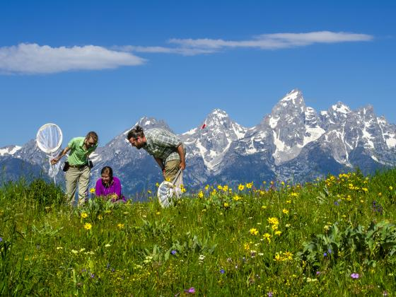 Three ecologist with nets looking at butterflies with the Teton Mountain Range in the background. | MSU photo by Kelly Gorham