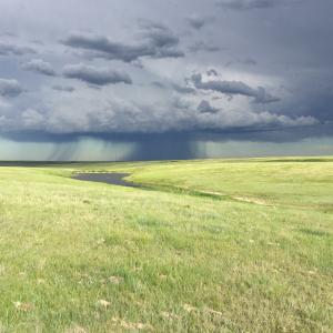 Grassland north of Glasgow protected with a conservation easement. Photo courtesy of Brian Martin.