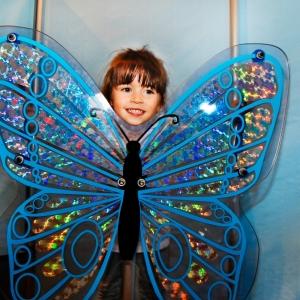 Amazing Butterflies Exhibition Photo