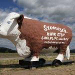 This prominent Hereford in west-central Montana demonstrates how a side of beef can be an effective billboard, says MSU professor William Wyckoff. (Photo by William Wyckoff).