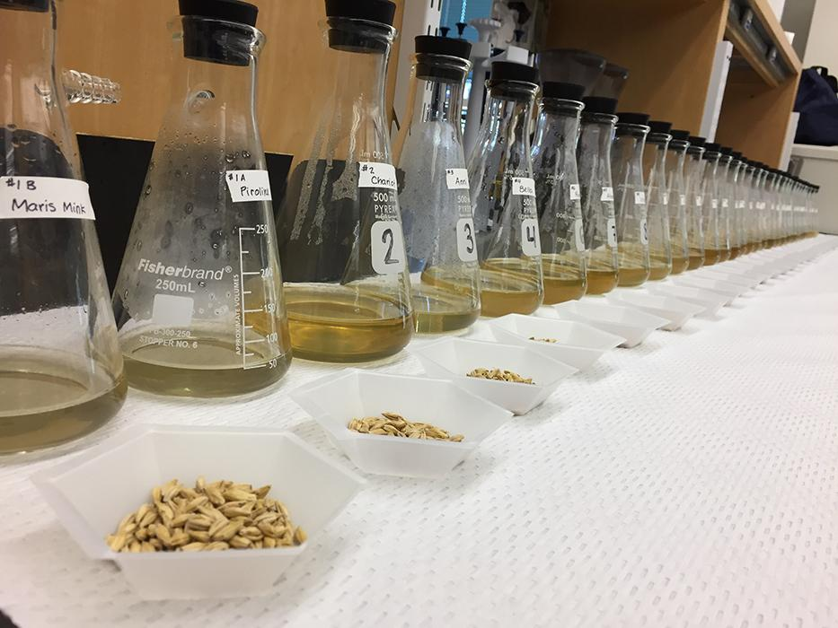 In preparation for our 2017 presentation to the MT Brewers Association we malted and produced wort from ~30 Heirloom varieties for sensory analysis